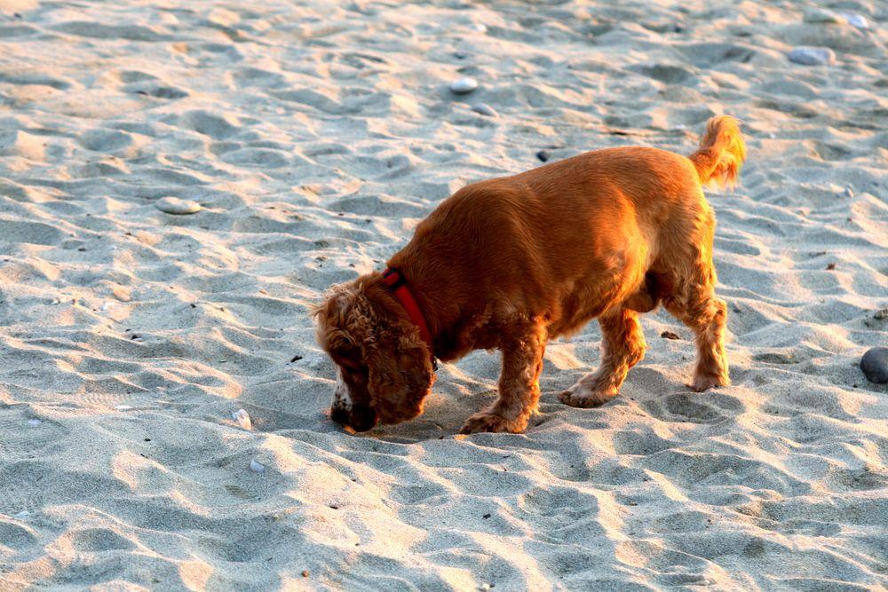 Η Φοίβη στήν άμμο